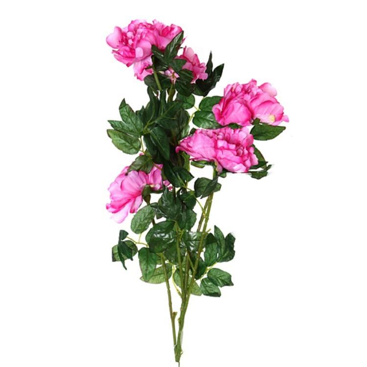 Фиолетовых роз, цветы интернет магазин дешево